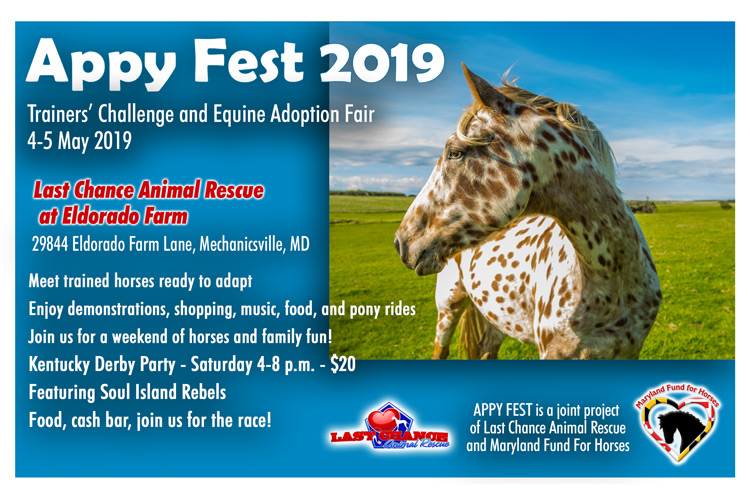 APPY FEST 2019 - Trainers' Challenge and Equine Adoption Fair