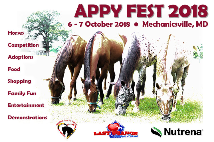 APPY FEST 2018